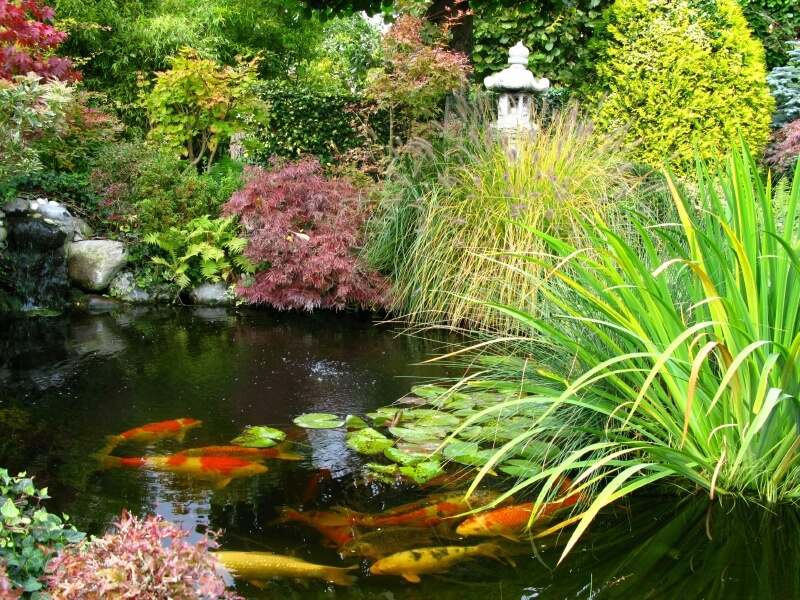 37 backyard pond ideas designs pictures for Growing plants with fish