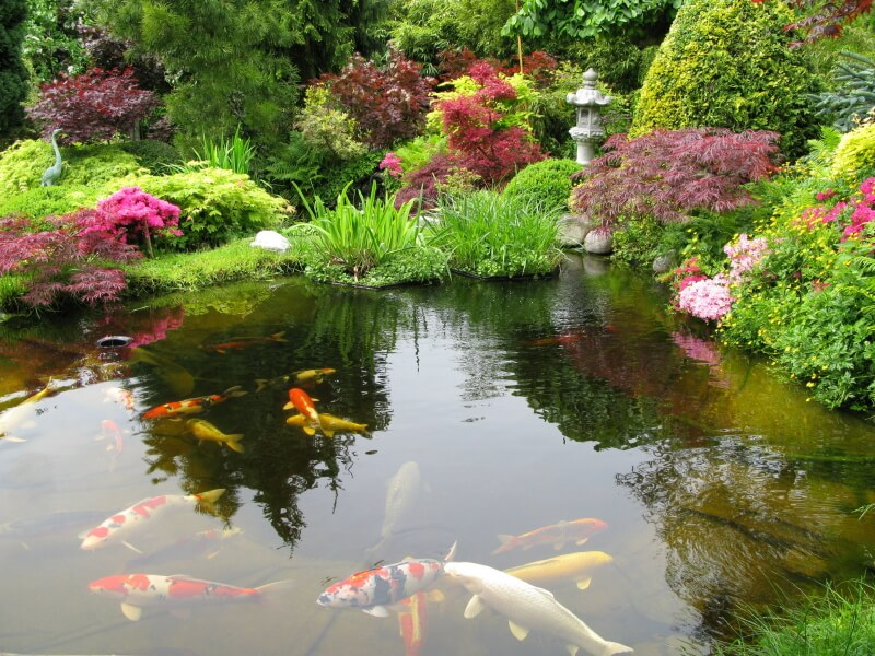 37 backyard pond ideas designs pictures for Large koi pool