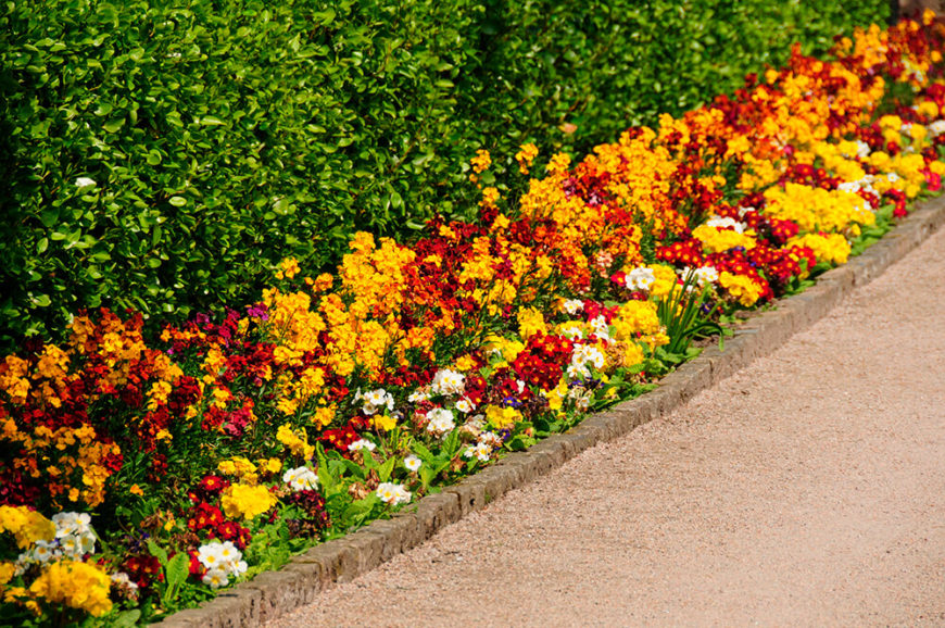 41 Incredible Garden Hedge Ideas For Your Yard (PHOTOS