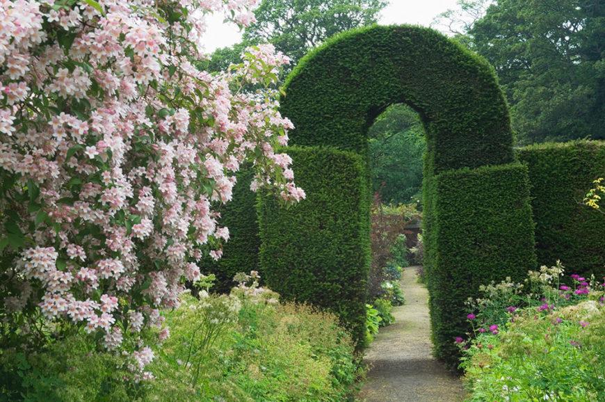 41 Incredible Garden Hedge Ideas for Your Yard (PHOTOS)