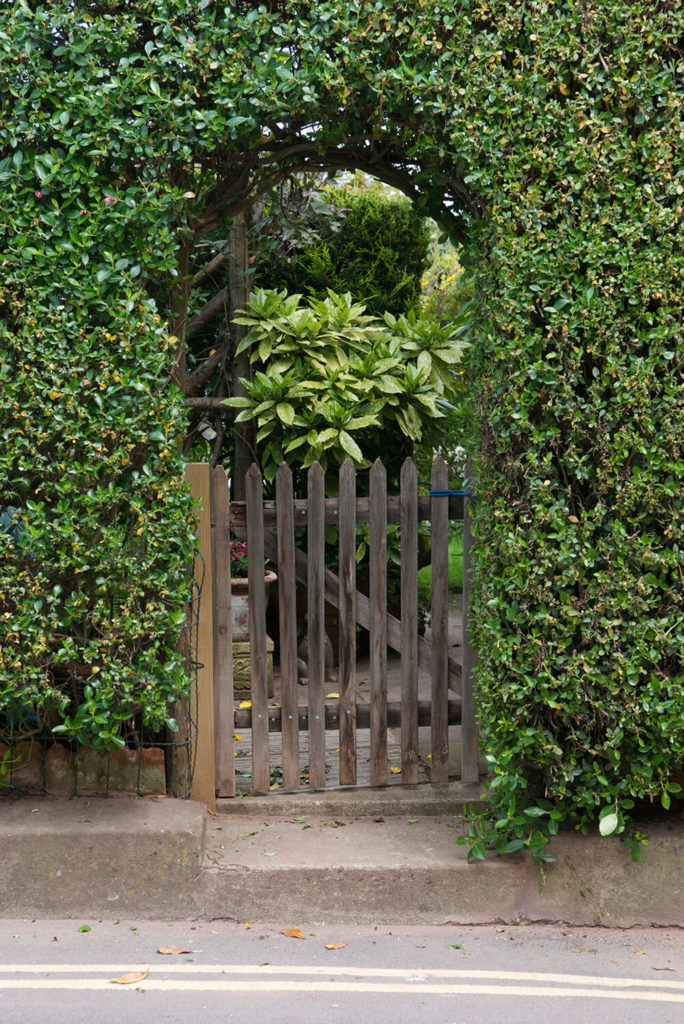 Small Bushes For Front Yard