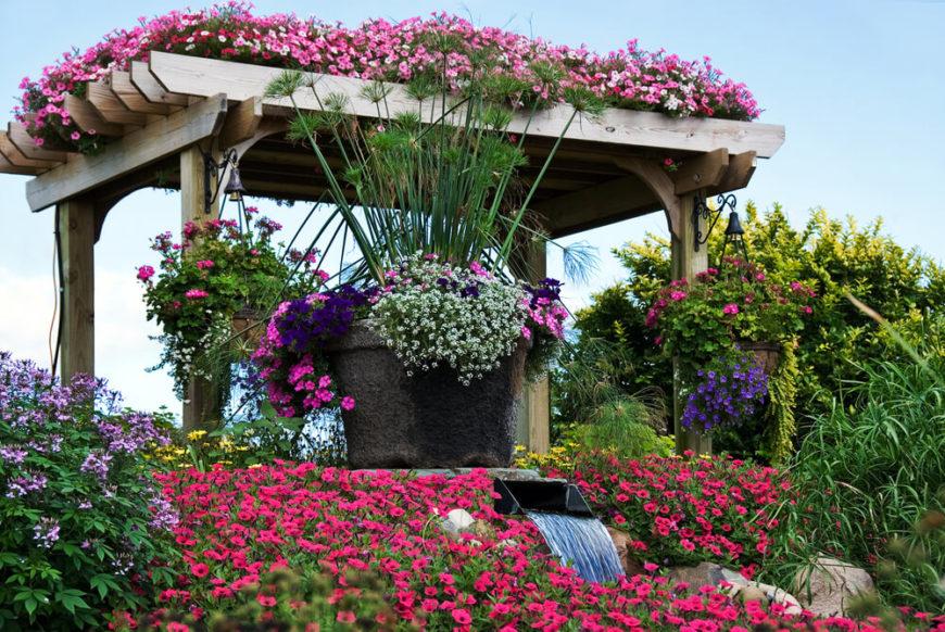 flowers for planters  flower, Beautiful flower