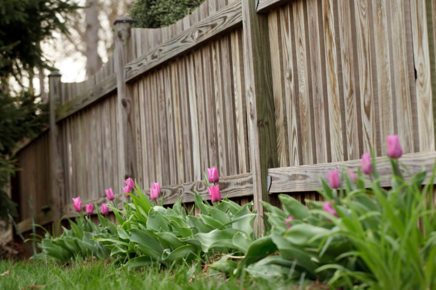 beautiful scallop top fence with a line of pink tulips along one side