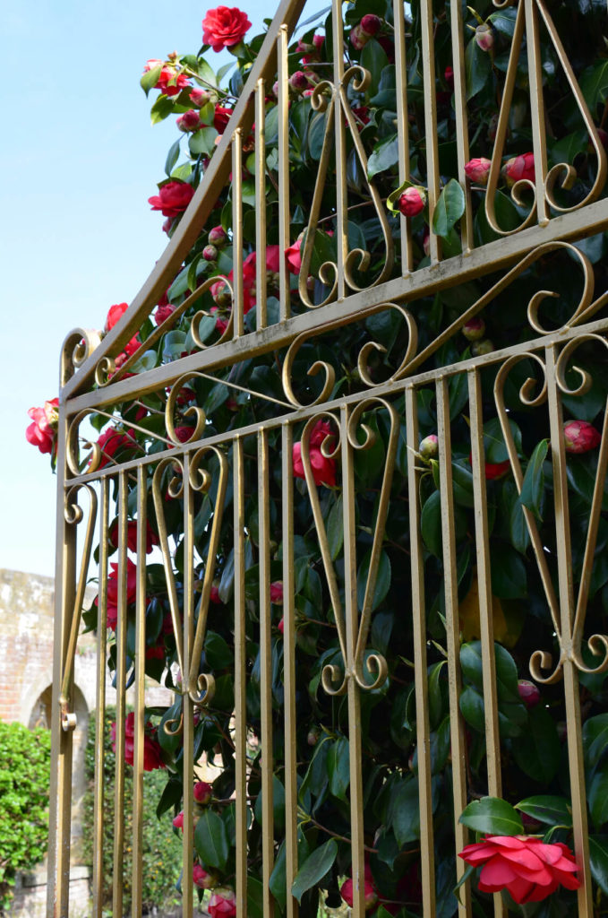 simple wrought iron fence. a beautiful design gives victorian look to these flowers simple wrought iron fence