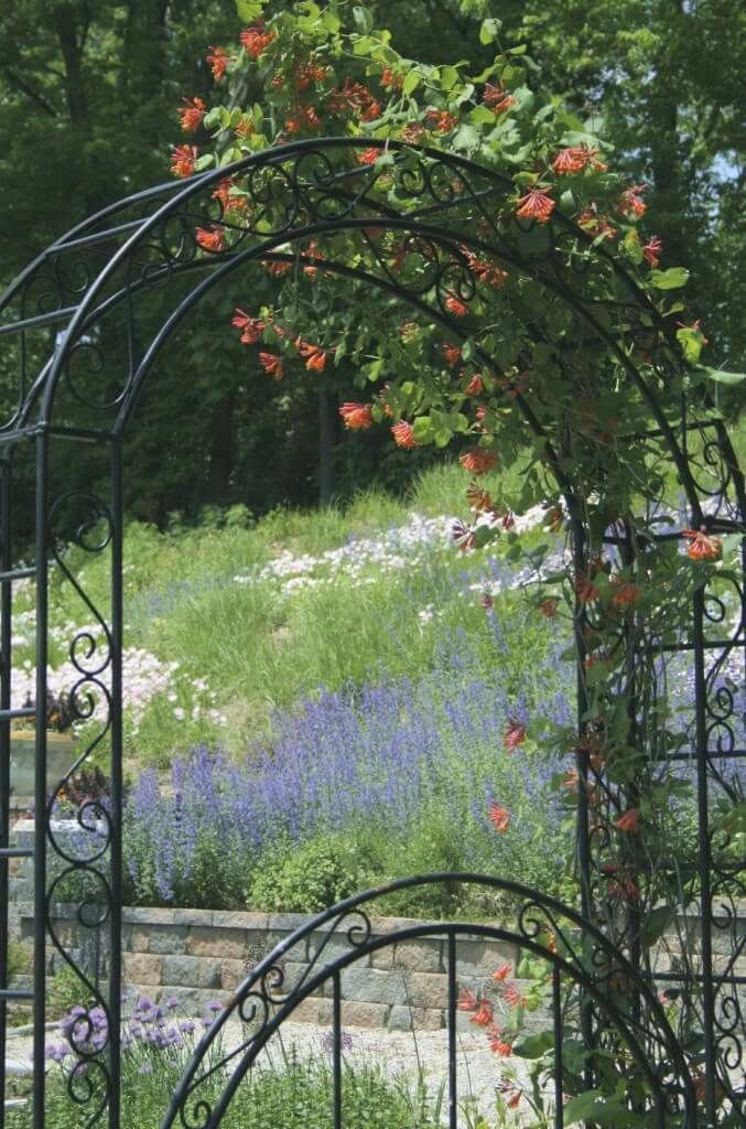 This trellis is combined into an arbor and trained with flowering vines. It also has a wrought iron gate.