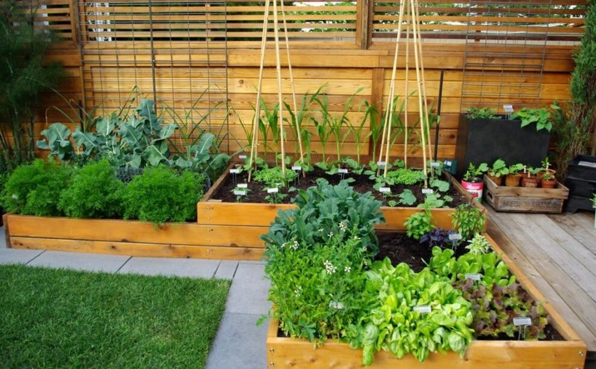 This vegetable garden is built in an L-shape in raised beds, taking advantage of a mostly unused corner of the garden by the patio