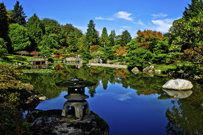 This view shows a massive swath of this Japanese garden from across a large pond. Trees densely populate this large example.