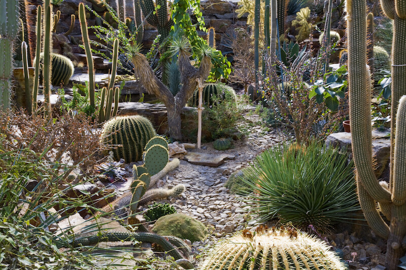 This southwestern garden has all kinds of different varieties, and is sure to be a low maintenance garden.