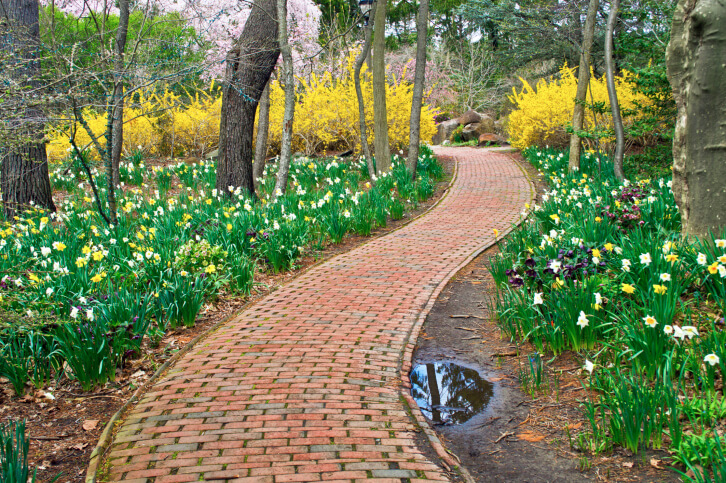 This brick walkway appears to be woven together as it passes by large beds of daffodils and through a wall of bold yellow flowering bushes.