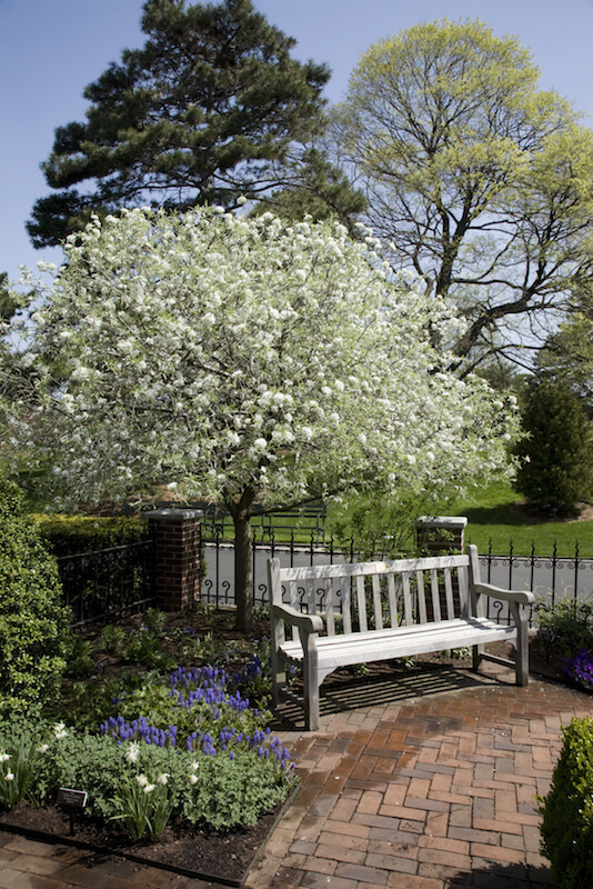 Ornamental trees mature faster, and often have fragrant flowers that bloom in the spring.