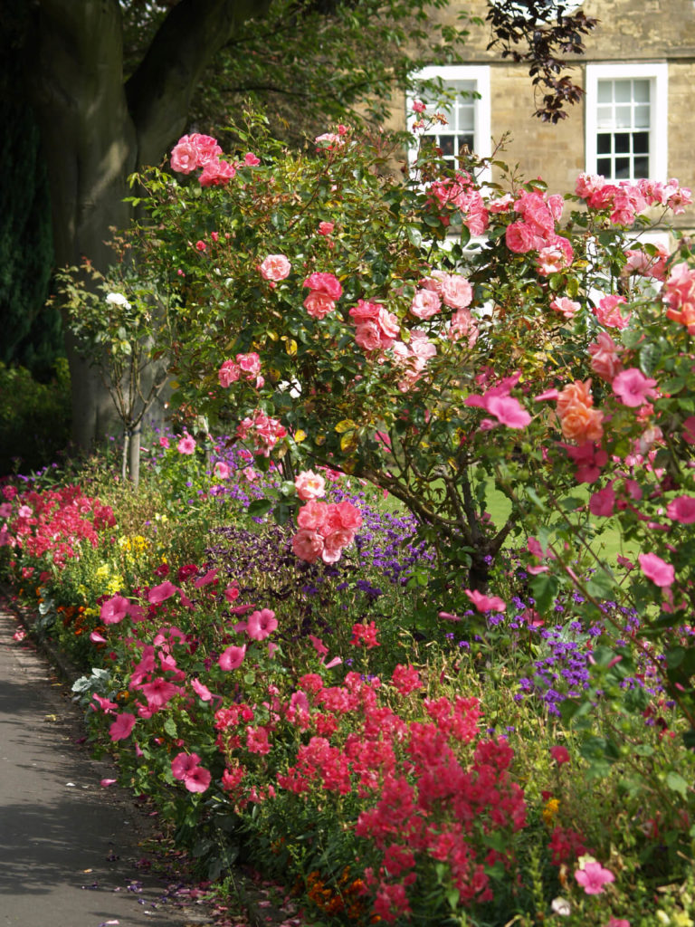30 ways to incorporate roses into your backyard for Best flowers for backyard gardens