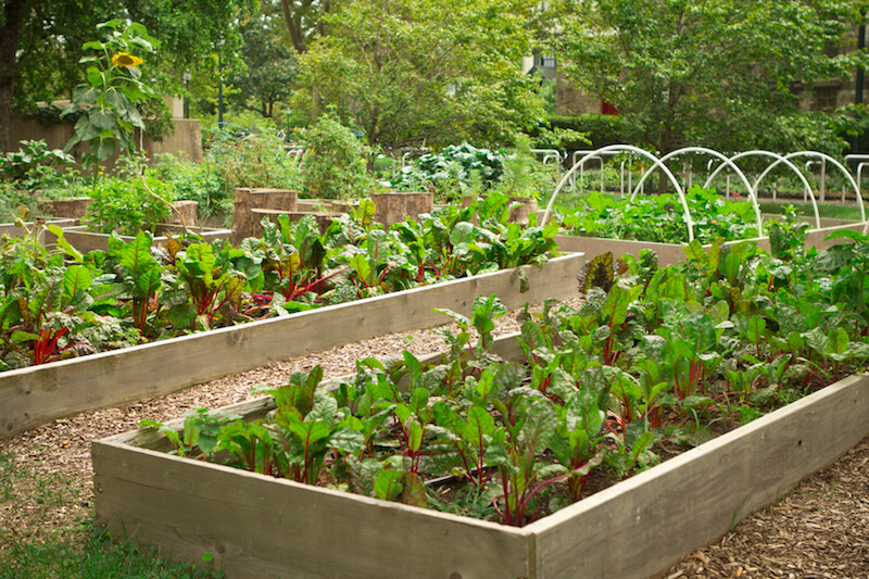Here are some raised garden beds, with a rustic appeal and some irrigation systems. Raised garden beds are useful for keeping crops organized and can reduce bending over, which can make the work a bit easier.