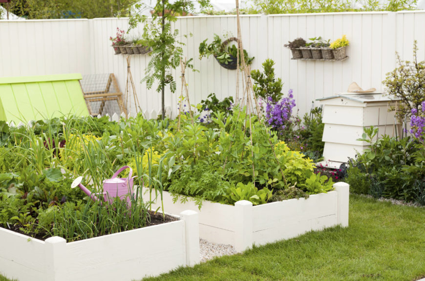 24 fantastic backyard vegetable garden ideas for Small area planting ideas