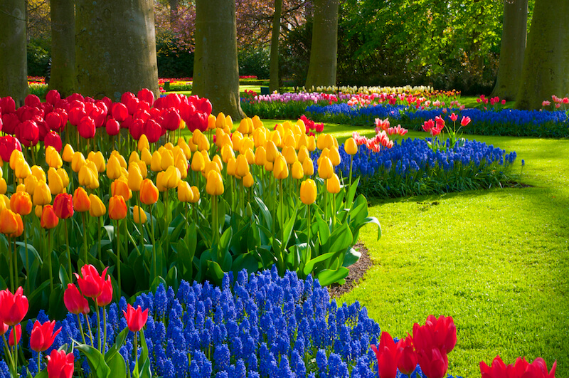 Flower Garden Ideas flower garden ideas screenshot thumbnail flower garden ideas screenshot thumbnail You Can Use Flower Colors To Create Patterns Across Your Space Bold And Bright Flowers
