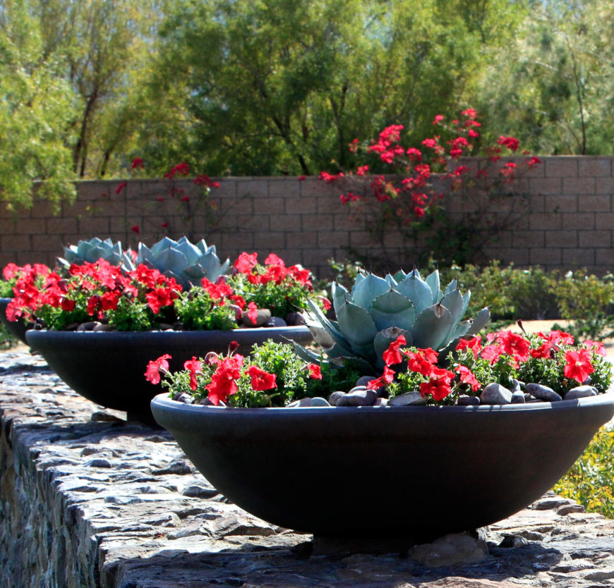 34 sharp cactus garden ideas for Nice garden ideas