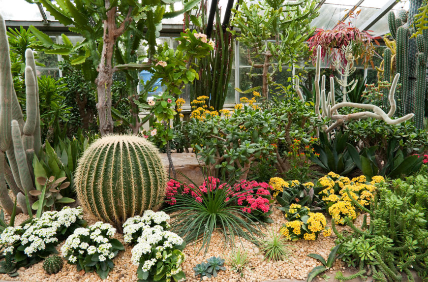 34 Sharp Cactus Garden Ideas - small cactus garden design