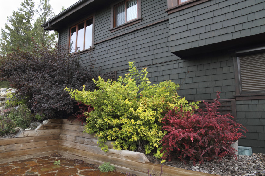 Change Front Elevation Of House : Clever backyard shrub garden ideas