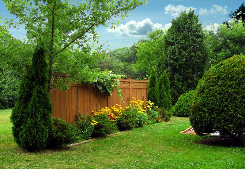 38 clever backyard shrub garden ideas - Shrubbery for privacy ...