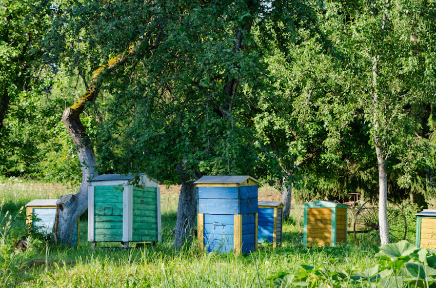 29 beautiful backyard bee hives home stratosphere