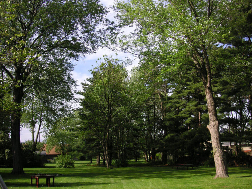 Tree Ideas For Backyard Best On