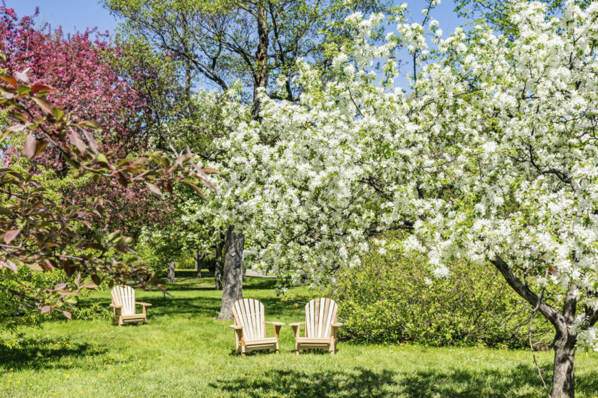 our delicious gallery of fantastic fruit tree ideas for your backyard