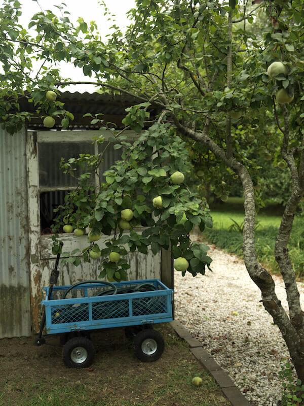 24 delicious backyard fruit tree ideas. Black Bedroom Furniture Sets. Home Design Ideas