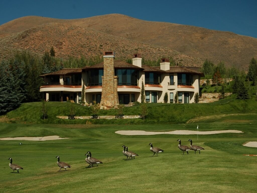 View of contemporary mansion on a golf course during the day (with geese waddling along the fairway)