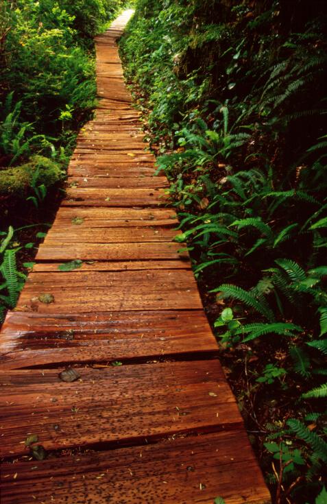 Wood Plank Walkway : Walkway ideas designs brick flagstone wood