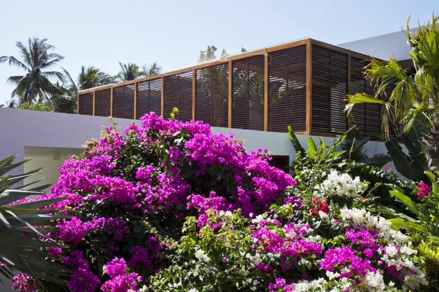 Overlooking the lush garden we see the timber louvers protecting upper balcony on the street side of the property.