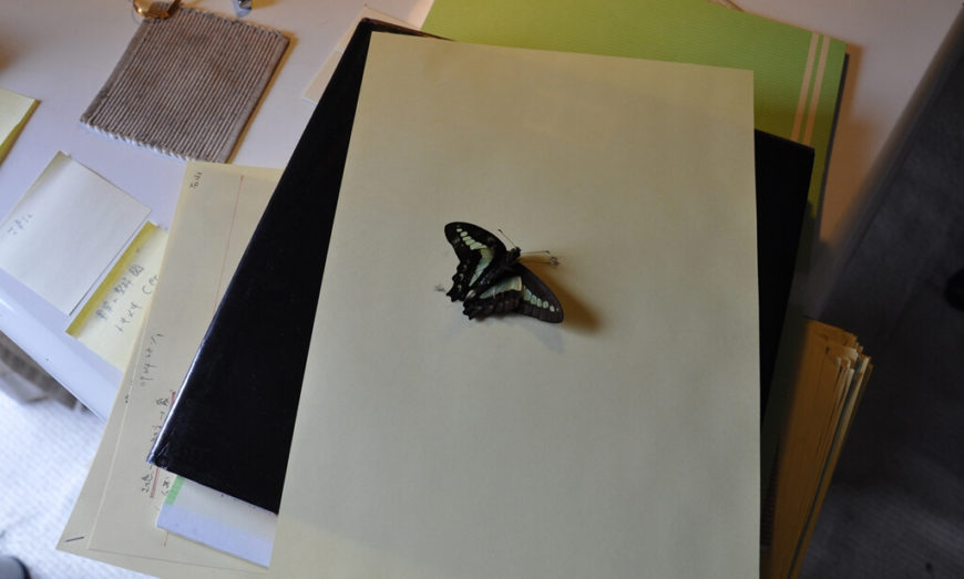 With work papers on a desk, we see another butterfly, whose wings were crucial in inspiring the design.