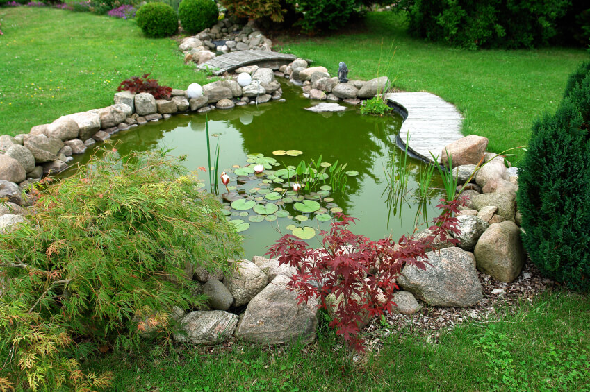 A Green Garden Pond With Small Maples Growing Along The Widest Side. A Small  Stream