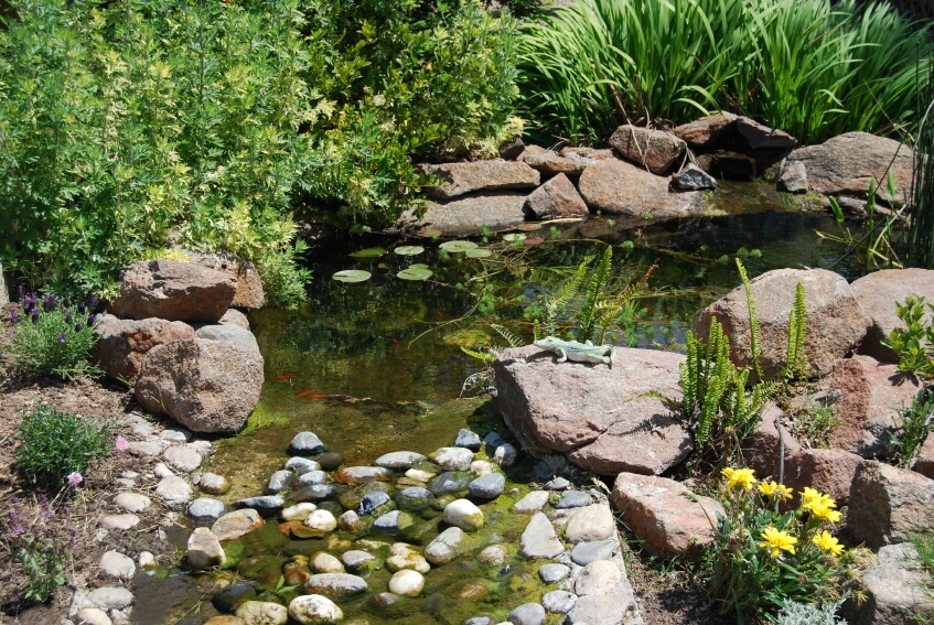 A Garden Pond Surrounded By Large Reddish Boulders That Tapers Off Into A  Shallow Stream Blocked