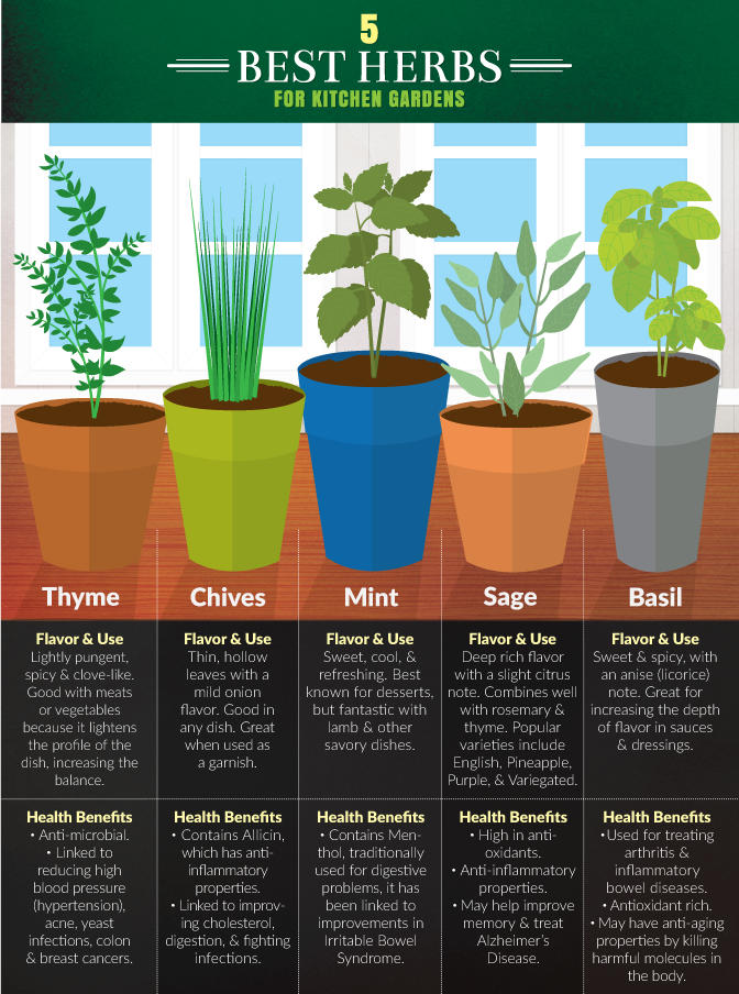 5 Best Herbs for an Indoor Kitchen Herb Garden