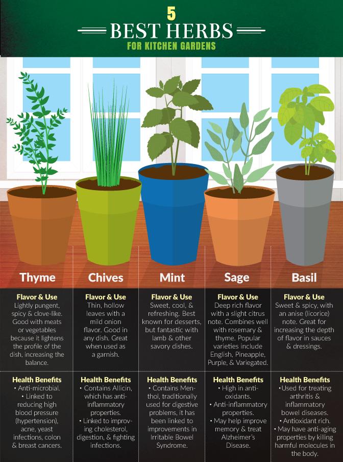 The 5 best herbs for your garden. 5 Best Herbs for an Indoor Kitchen Herb Garden