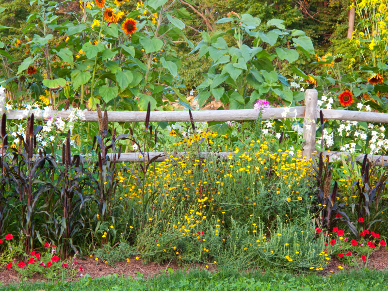 A Rustic Wood Perimeter Fence With Beautiful Wildflowers In Bold Color.