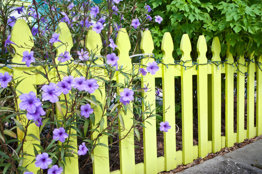 A Pale Yellow Perimeter Fence With Trees And Light Purple Flowers Peeping  Through. Wrapped Around