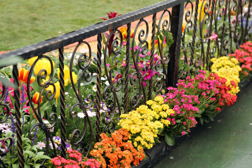 An ornate black wrought iron fence with a wooden base. Low, brightly colored flowers line the bottom on the inside, while taller flowers like tulips and daisies are on the inside.