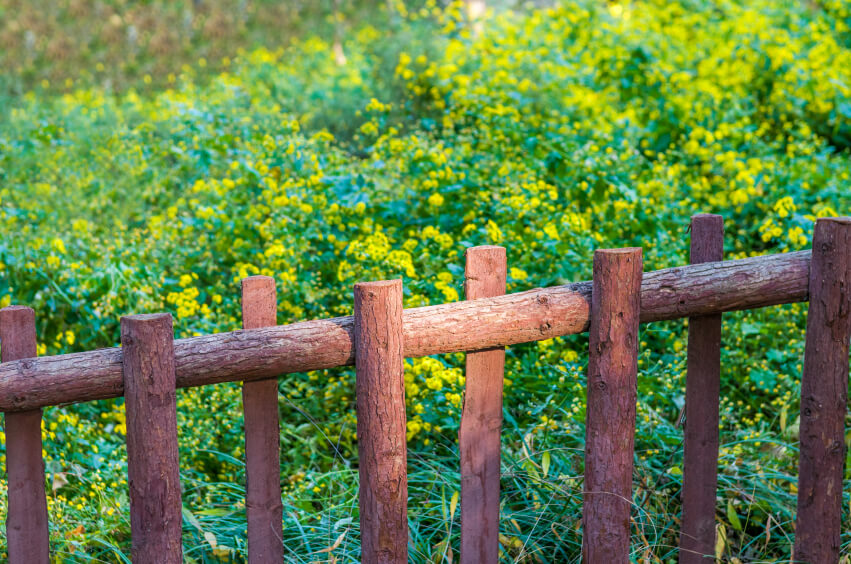 A rustic birch fence with wildflowers in the background.