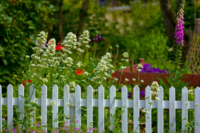 A pretty garden fence in white with a partial red fence behind it and tall, whimsical flowers waving in the breeze.