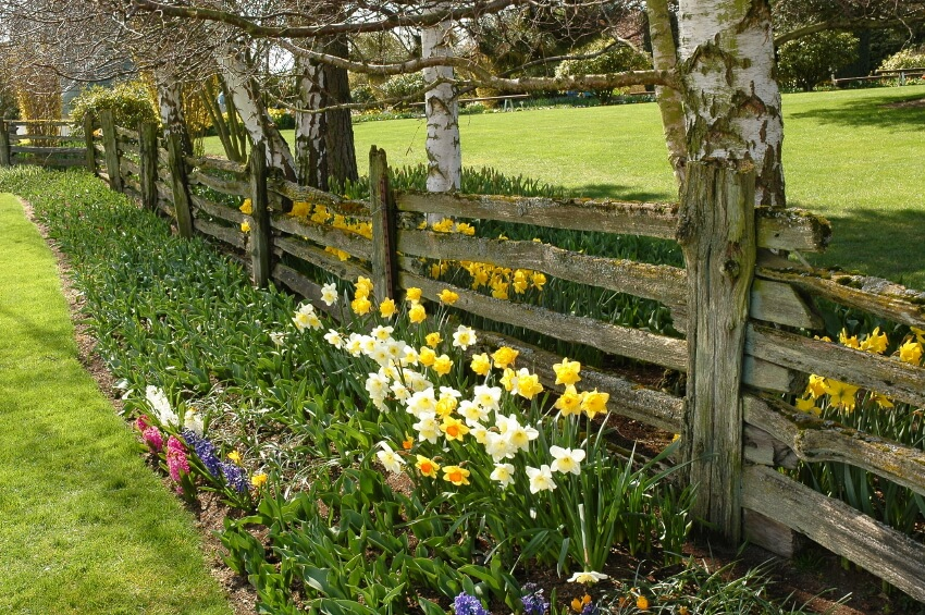 Garden Fencing Ideas building a cheap garden trellis A Farm Style Wooden Fence With Moss Growing On The Uneven Slats Simple Planting