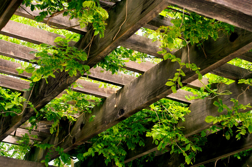 A wood trellis aids an overhang of vines and greenery.