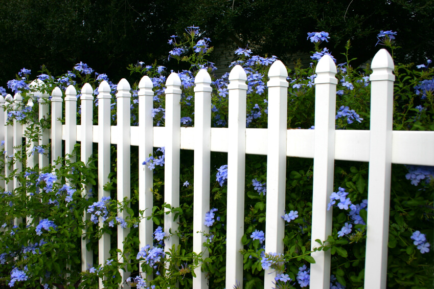 Another PVC picket fence in white with light purple flowers flowing through and over the slats.