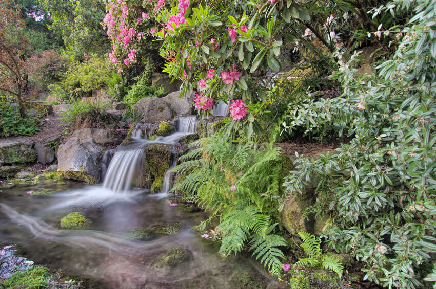 A Tropical Garden Waterfall With A Dirt Pathway Alongside It. Flowering  Trees, Ferns,