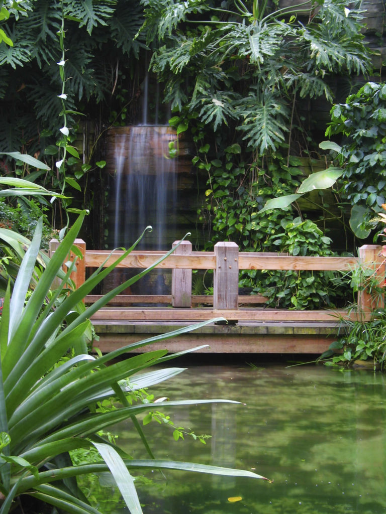A Tranquil Natural Wood Bridge Crossing An Algae Filled Pond With Sheer Waterfall Behind