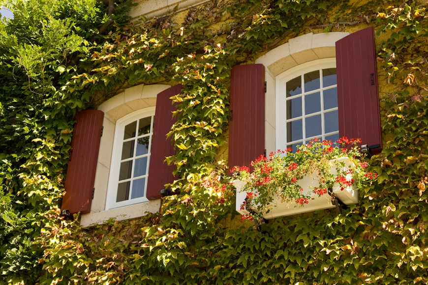 Two windows peek out of an ivy covered building facade, one with a simple wooden window box with small red flowers.