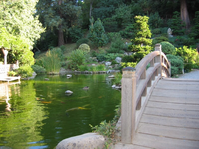 A Japanese Garden Bridge Arcing Over A Koi Pond With A Light Green Hue.  Water