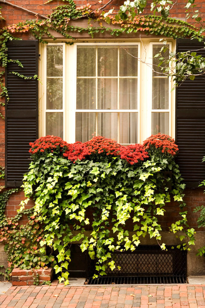 A window box with ivy pouring out and touching the ground below. Red mums are & 32 Stunning Flower Box Ideas u0026 Arrangements Aboutintivar.Com