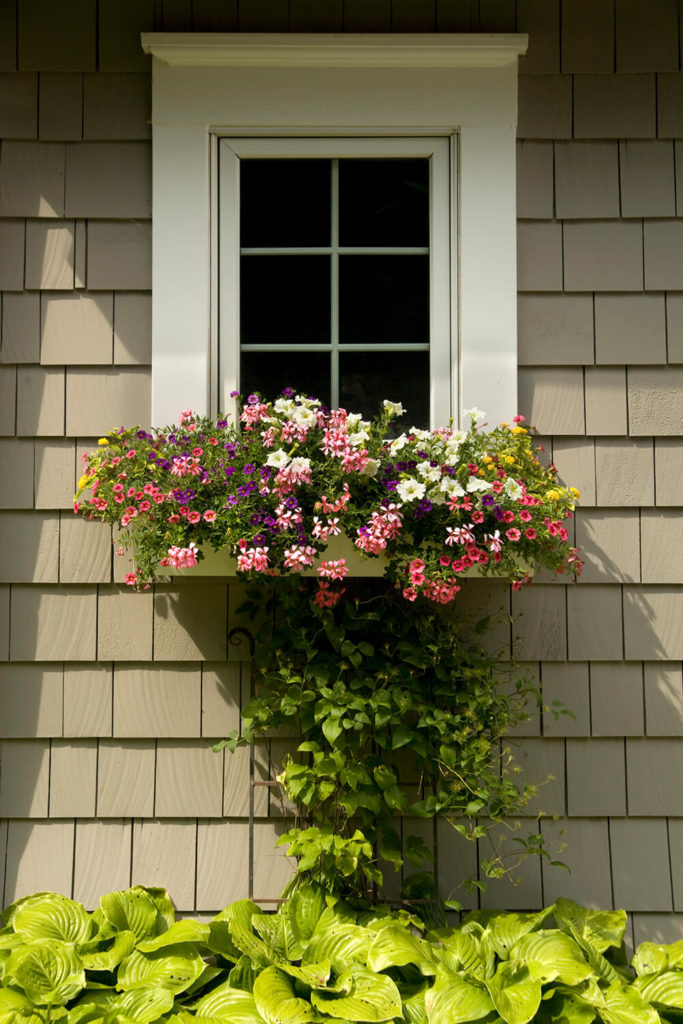 Vines trail up to the bottom of this window box stuffed with many different kinds of flowers. Hosta plants sit below.