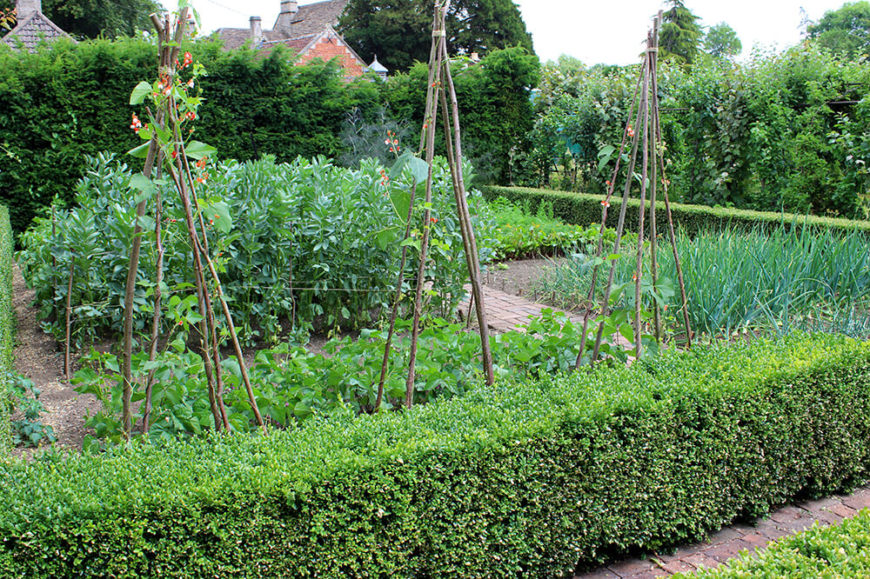 Surrounding this garden with low hedges not only divides the different beds but it also adds form and structure to the wildly growing plants it borders.