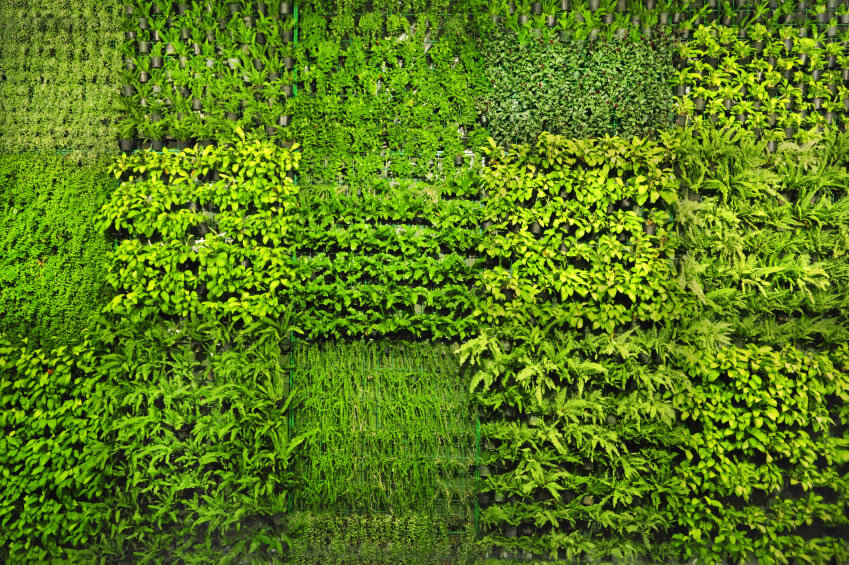 7-vertical-garden Density is the keyword when it comes green walls, as its carrying capacity only is limited by the surface area of the wall - the more surface area, the more space for your 'living' wall.